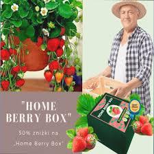 Home Berry Box - hausgemachte Erdbeeren - Bewertung - kaufen - Erfahrungen