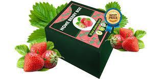 Home Berry Box - preis - Kommentatoren - forum