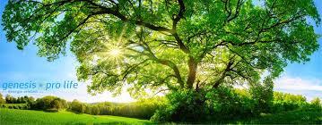 Genesis Pro Life – harmonisiert Ihre Umgebung - Nebenwirkungen – kaufen – comments